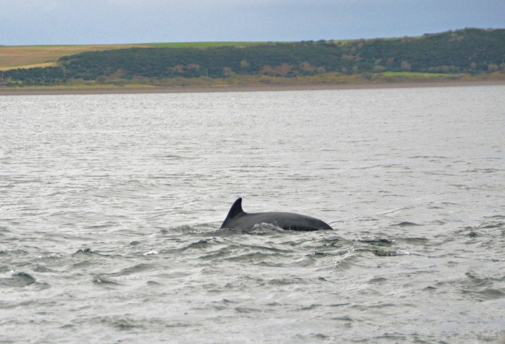 Best places to visit in inverness Dolphin Watching at Chanonry Point inverness